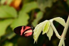 未知的蝴蝶 免版税库存图片