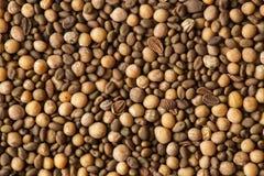 未腐烂之肥料种子 免版税图库摄影