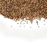 未腐烂之肥料种子 免版税库存图片
