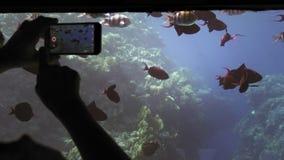未被认出的剪影在一艘水下的船研究、视图和照片的旅游手五颜六色的鱼群  影视素材