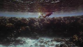 未被认出的轻潜水员、废气管在鸭脚板和一个潜水的面具在美好的多彩多姿的珊瑚的背景 股票录像
