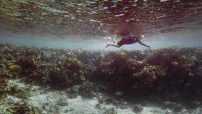 未被认出的轻潜水员,在一个潜水的面具的废气管在珊瑚礁的背景 在行动的射击 o ?? 影视素材