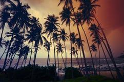 未触动过的热带海滩在斯里兰卡 免版税库存图片