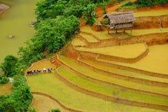 未认出的农夫做在他们的领域的农业工作 免版税库存照片