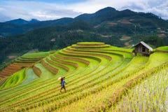 未认出的农夫在Mu Cang柴,安沛市,越南做在他们的领域的农业工作2015年6月13日 图库摄影