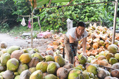 未认出的地方妇女削皮椰子 免版税库存图片