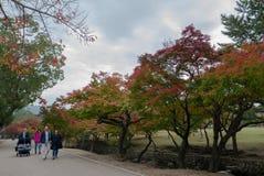 未认出的旅游步行通过享受在奈良鹿公园的秋天颜色在奈良, 库存图片