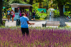 未认出的无法认出的女工浇灌淡紫色flowerb 库存照片