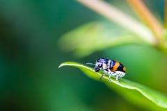 未认出的甲虫 免版税库存图片