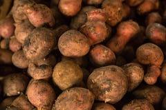 未洗的土豆堆 免版税库存照片