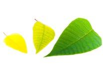 末端绿色叶子黄色 库存图片