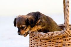 本地狗跳出篮子 免版税库存照片