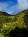 本质苏格兰步行者 免版税图库摄影