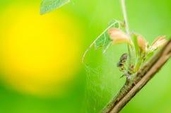 本质蜘蛛 库存图片
