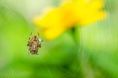 本质蜘蛛 免版税库存照片