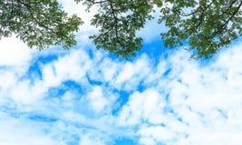 本质、叶子天空和分支  免版税库存图片