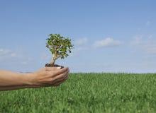 本质结构树 免版税库存图片