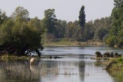 朱拉山的狂放的河,法国 库存照片
