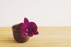 2朵兰花 图库摄影