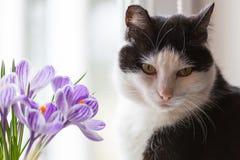 10朵猫eps花例证向量 免版税库存图片
