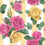 2朵玫瑰 库存图片