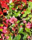 2朵花 图库摄影