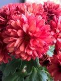 1朵花 库存图片