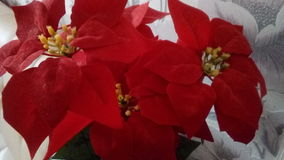 2朵花 库存图片