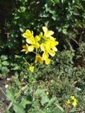 3朵花 图库摄影