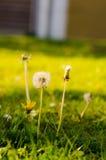 10朵花 免版税图库摄影