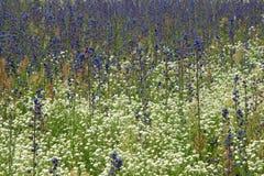 10朵野花 免版税图库摄影