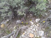 4朵黄色花丛生土壤岩石 库存图片