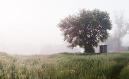 8朵添加大蓝色云彩遥远的容易的eps调遣五前景格式绿色横向草甸计划红色农村天空春天那里郁金香村庄 免版税库存照片