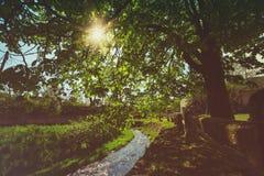 8朵添加大蓝色云彩遥远的容易的eps调遣五前景格式绿色横向草甸计划红色农村天空春天那里郁金香村庄 免版税图库摄影