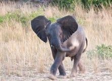 机体大象他的沙子小投掷 库存照片
