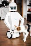 机器人喂养小狗 免版税库存图片