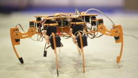 机器人蜘蛛展示现代机器人学的可能性 股票视频