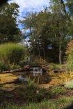 机器寿命和瀑布在池塘 免版税图库摄影