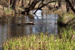 机器寿命春天一条小小河的风景和树 免版税图库摄影