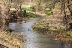 机器寿命春天一条小小河的风景和树 免版税库存照片