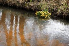 机器寿命春天一条小小河的风景和树 库存照片