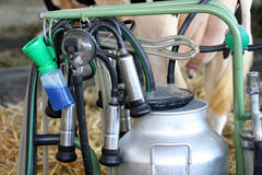 机器挤奶 库存照片