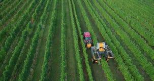 机器葡萄收获空中英尺长度在葡萄园里 股票录像