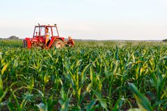 机械化处理在行之间的草在玉米田 免版税库存照片