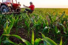 机械化处理在行之间的草在玉米田 免版税库存图片