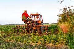 机械化处理在行之间的草在玉米田 免版税图库摄影