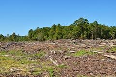 机械清除的被砍伐山林的土地 免版税库存照片