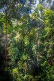 机盖在密林,大汉山国家公园国立公园,马来西亚 免版税库存图片