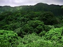 机盖夏威夷人 免版税库存照片