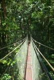 机盖天空步行在雨林里 库存图片